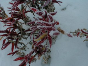 snow hot peppers