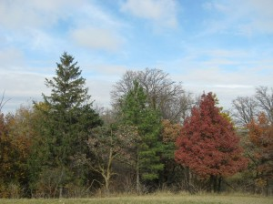Spruce-Pine-White-Oak-Autumn