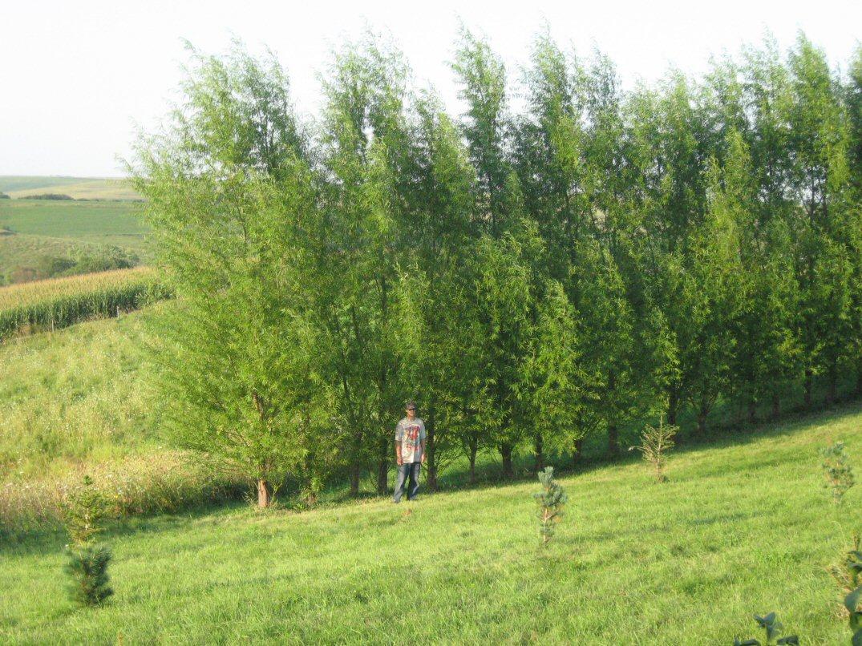 kleckner oasis hybrid willow. Black Bedroom Furniture Sets. Home Design Ideas