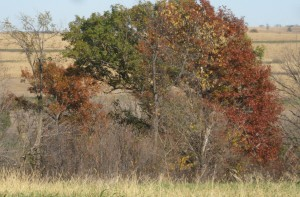 Different-Fall-Stage-Red-Oak
