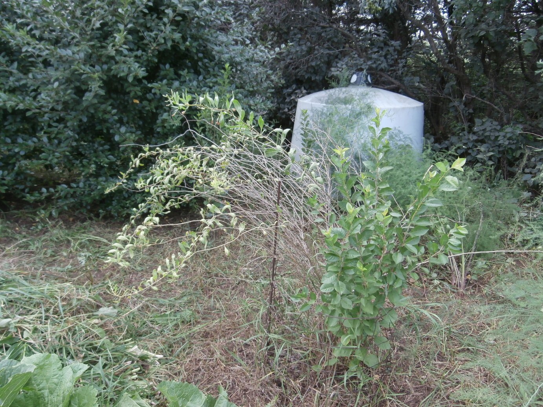 Kleckner Oasis Wolfberry